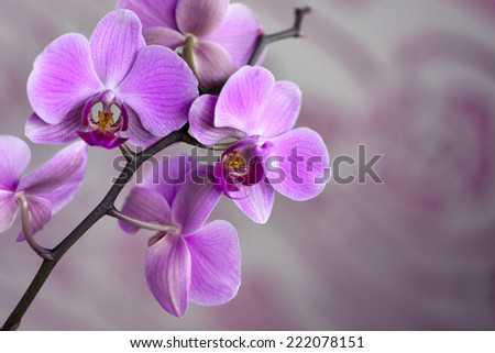 Beautiful violet orchid  - stock photo