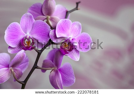 Beautiful violet orchid