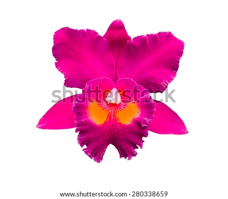 Beautiful violet orchid isolated on white background - stock photo