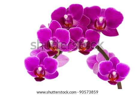 beautiful violet orchid isolated on white background