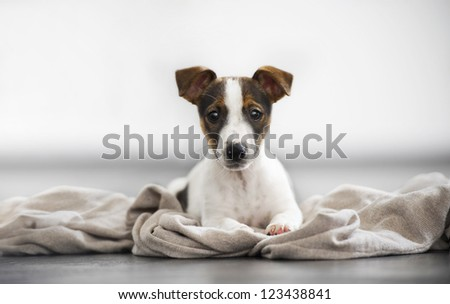 Beautiful watch dog - stock photo