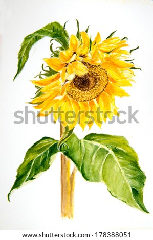 Beautiful water color painting of a Sunflower - stock photo