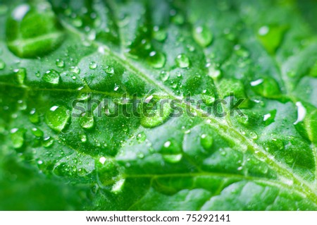 Beautiful water drop on a leaf - stock photo