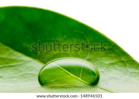 Beautiful water drop on a leaf shoot in macro lens - stock photo
