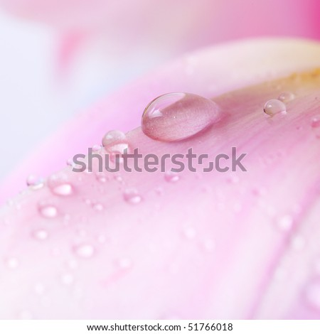 Beautiful water drop on pink petals, super macro - stock photo