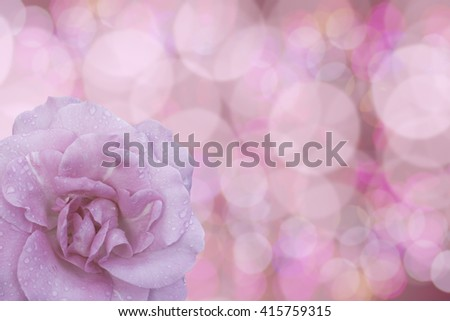 Beautiful water drop on pink roses on a soft background - stock photo