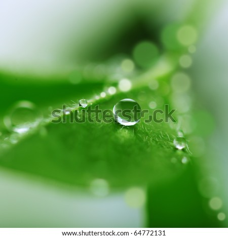 Beautiful water drop on the green leaf - stock photo