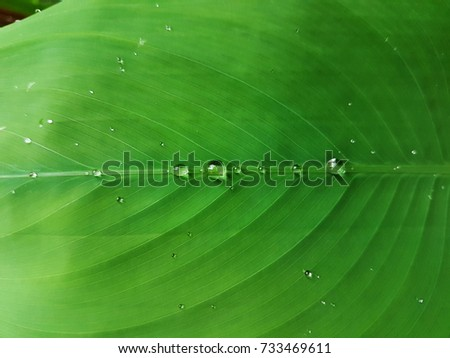 beautiful Water drops on Grass blade. in Thailand