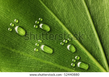 Beautiful water footprint drops on a leaf close-up - stock photo