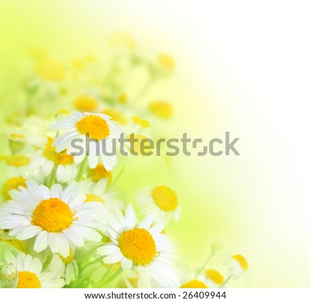 Beautiful Watercolor Chamomiles - stock photo