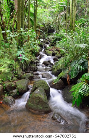 beautiful waterfall in the green tropical forest jungle in Hawaii Big Island Oahu