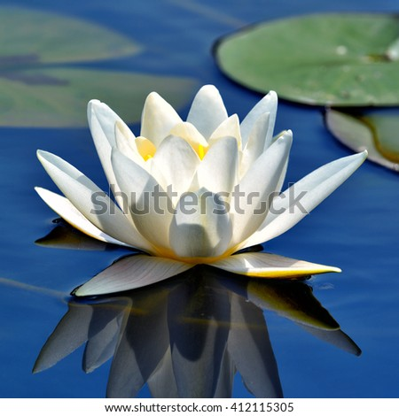Beautiful waterlily against blue lake water - stock photo