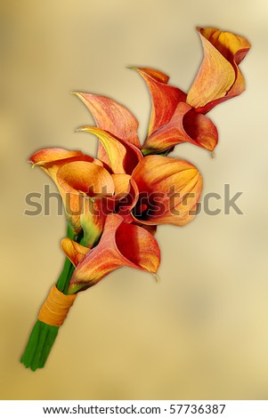 beautiful wedding bouquet  with calla lillies - stock photo