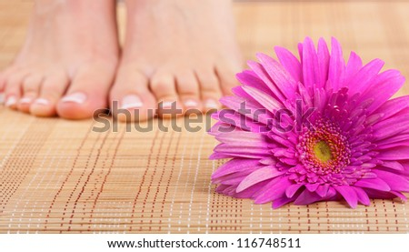 Beautiful well-groomed feet with pedicure and pink flower. Focus on flower