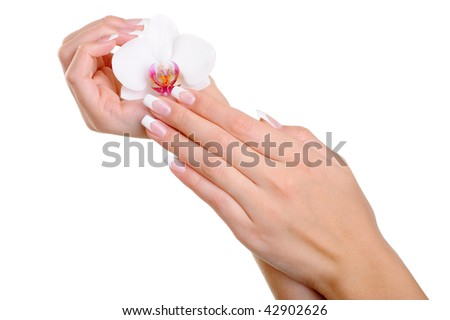 Beautiful well-groomed  female hand with elegance fingers and  french manicure hold the white flower - stock photo