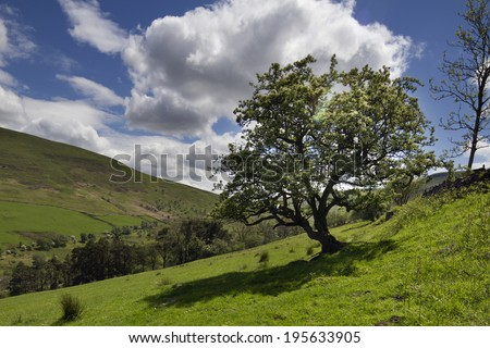 beautiful welsh countryside in the brecon beacons on a summer's day focused on a large tree - stock photo