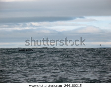 Beautiful whale in the ocean - stock photo