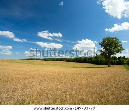 beautiful wheat field - stock photo