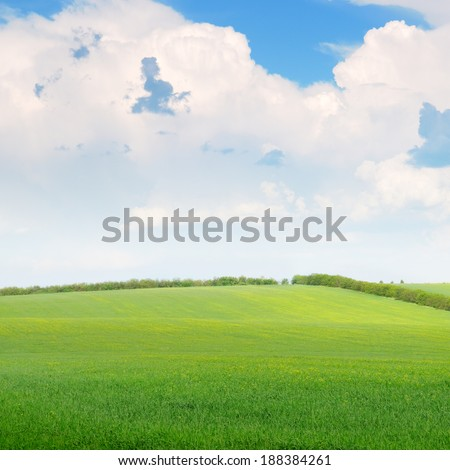 beautiful wheat field and blue cloudy sky - stock photo