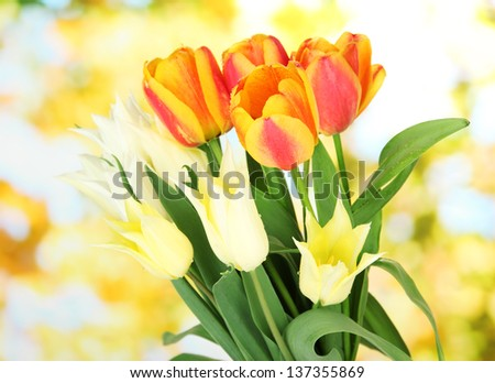 Beautiful white and orange tulips on bright background - stock photo