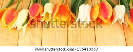 Beautiful white and orange tulips on wooden background - stock photo