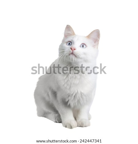 Beautiful white cat staring at the camera - stock photo