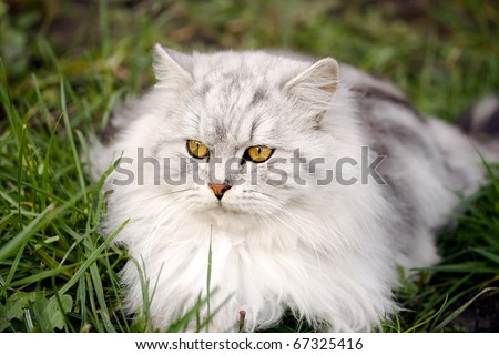 beautiful white cat with garden background - stock photo