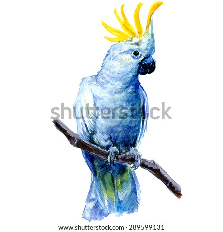 Beautiful white Cockatoo, Sulphur crested Cockatoo standing on a branch, watercolor painting on white background - stock photo