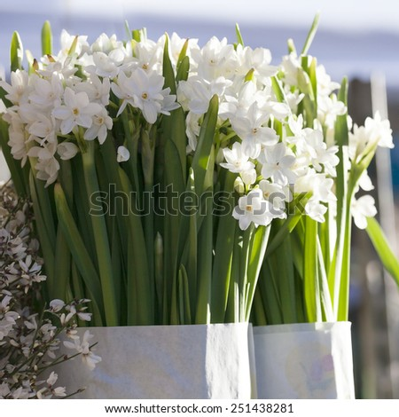 Beautiful white daffodils. Narcissus. - stock photo