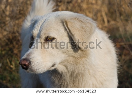 beautiful white dog