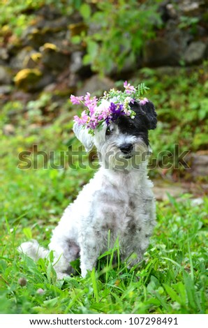 beautiful white dog with garland of forest  flowers - stock photo