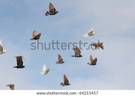 Beautiful white doves and pigeons in flight, blue sky background - stock photo