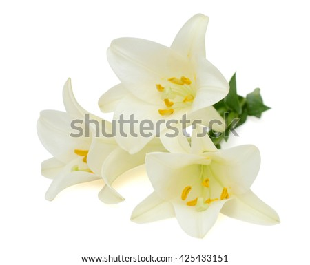 beautiful white easter lily flower isolated on white background