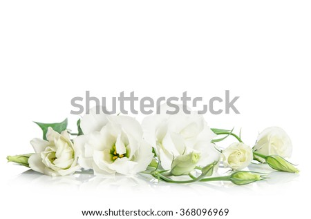 Beautiful white eustoma flowers isolated on white background - stock photo
