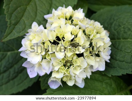 Beautiful White Flower - stock photo