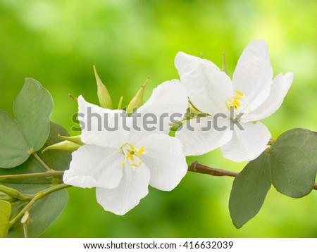 Beautiful white flower - stock photo