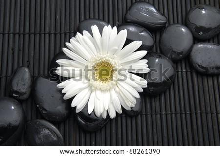 Beautiful white flower and stone on bamboo mat - stock photo
