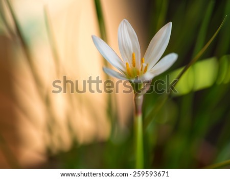 Beautiful white flower close-up. Selective focus with shallow depth of field. - stock photo