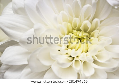 Beautiful white flower macro - stock photo