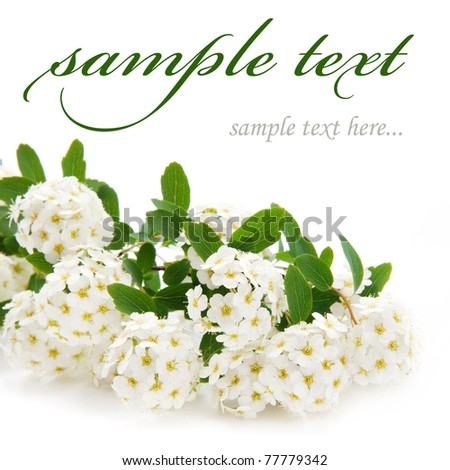 beautiful white flowers isolated on white background - stock photo