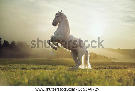 Beautiful White Horse Jumping Beautiful White Horse Stock