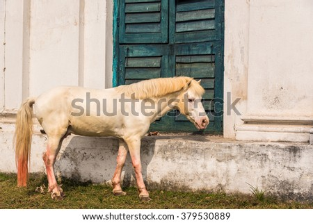 Beautiful white horse grazing outside a barn - stock photo