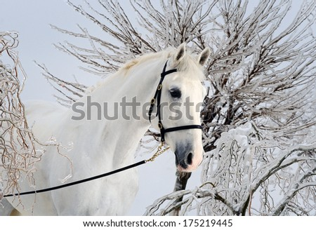 Beautiful white horse in magic winter forest - stock photo