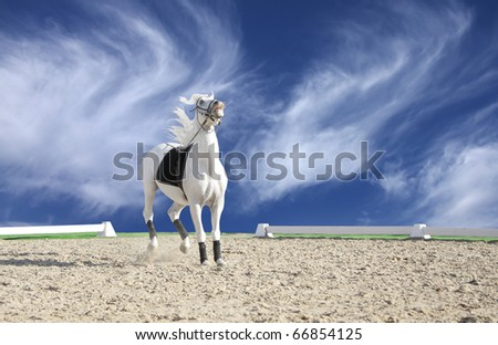 Beautiful White Horse Jumping Beautiful White Horse Ready to