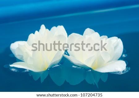 Beautiful White Jasmine Flowers in Blue Water - stock photo