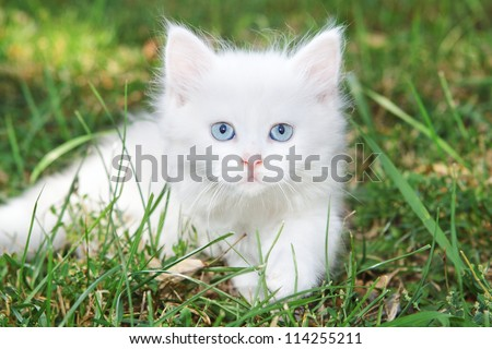 Beautiful white kitten in the park on the grass.