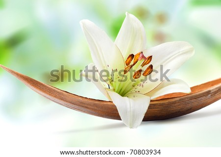 Beautiful white lily flower on a coco palm leaf, isolated on white - stock photo