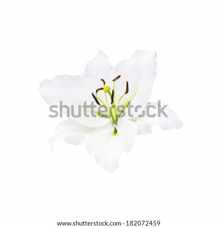 beautiful white lily on white background with clipping path - stock photo