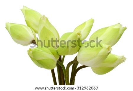 Beautiful white lotus flower bouquet isolated on white background - stock photo