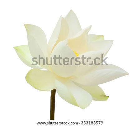 beautiful white Lotus flower isolated on white background - stock photo